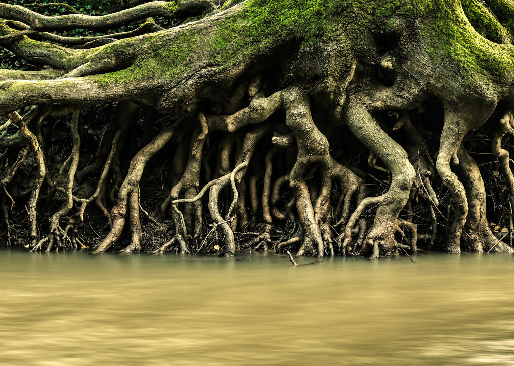 Tree Roots, Mole River Gravels